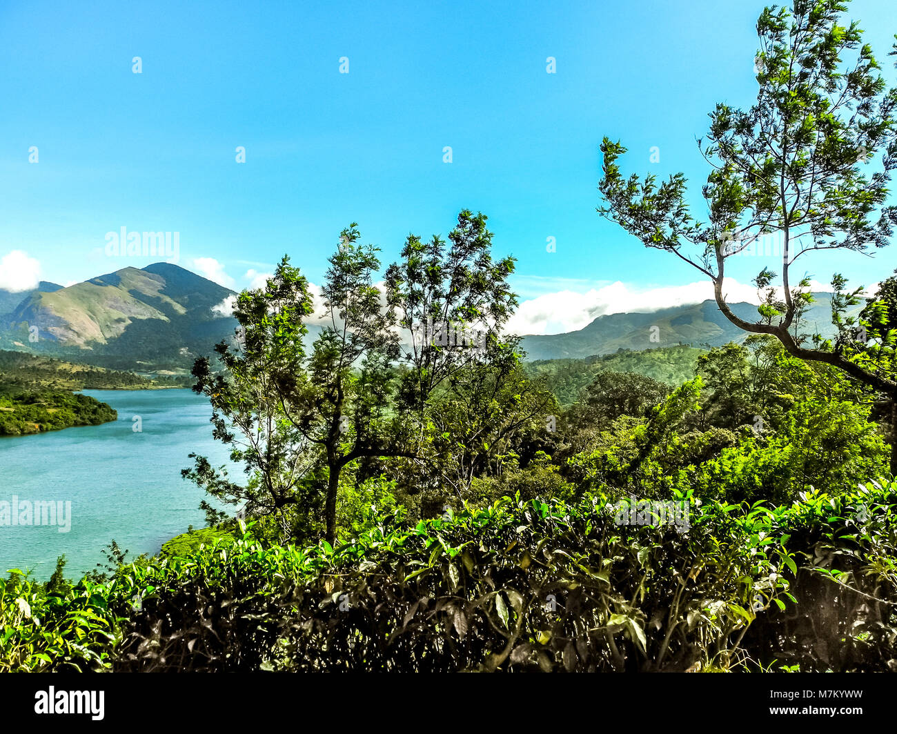 THEKKADI, KERALA, INDIA - DEC. 15 2011: Beautiful landscape with colorful wild forest and Periyar River, Thekkadi, - Stock Image