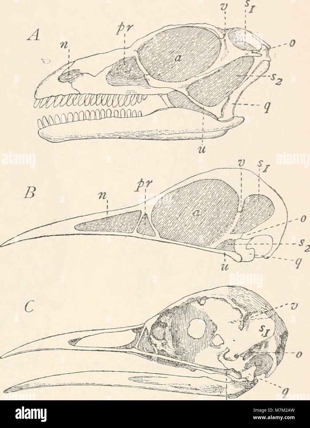 Abstammungslehre, Systematik, Paläontologie, Biogeographie; (1914) (16147110374) - Stock Image