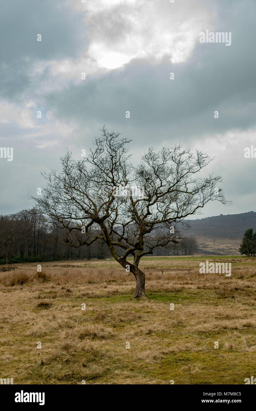 Mystical Tree - Stock Image