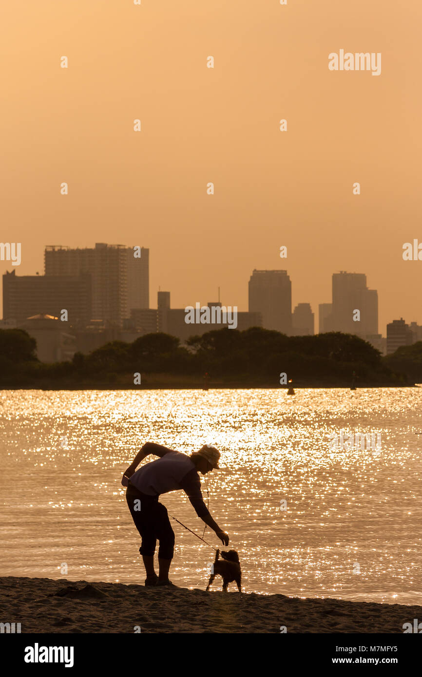 A young man in silhouette, plays with his small dog by the side of Tokyo Bay in Odaiba, Tokyo, Japan Saturday, May - Stock Image
