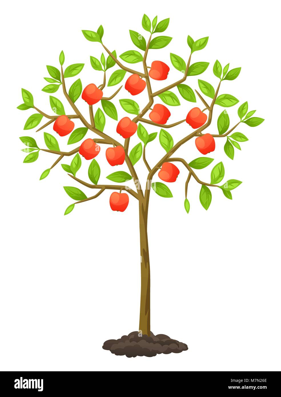 Fruit tree with apples. Illustration for agricultural booklets, flyers garden - Stock Vector