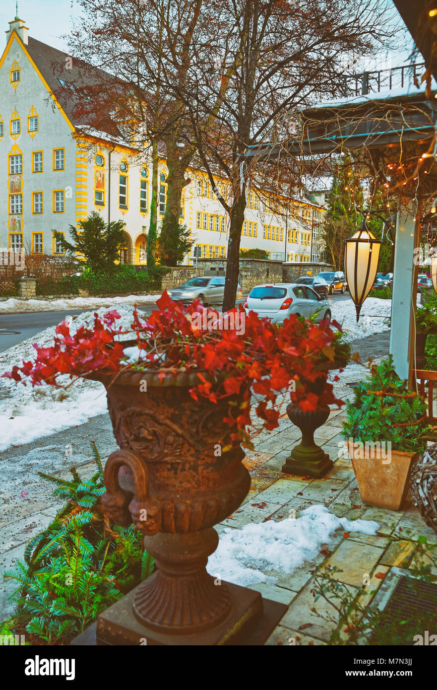 Christmas Flower Pots.Evergreens Beautiful Bright Plants In Flower Pots In A