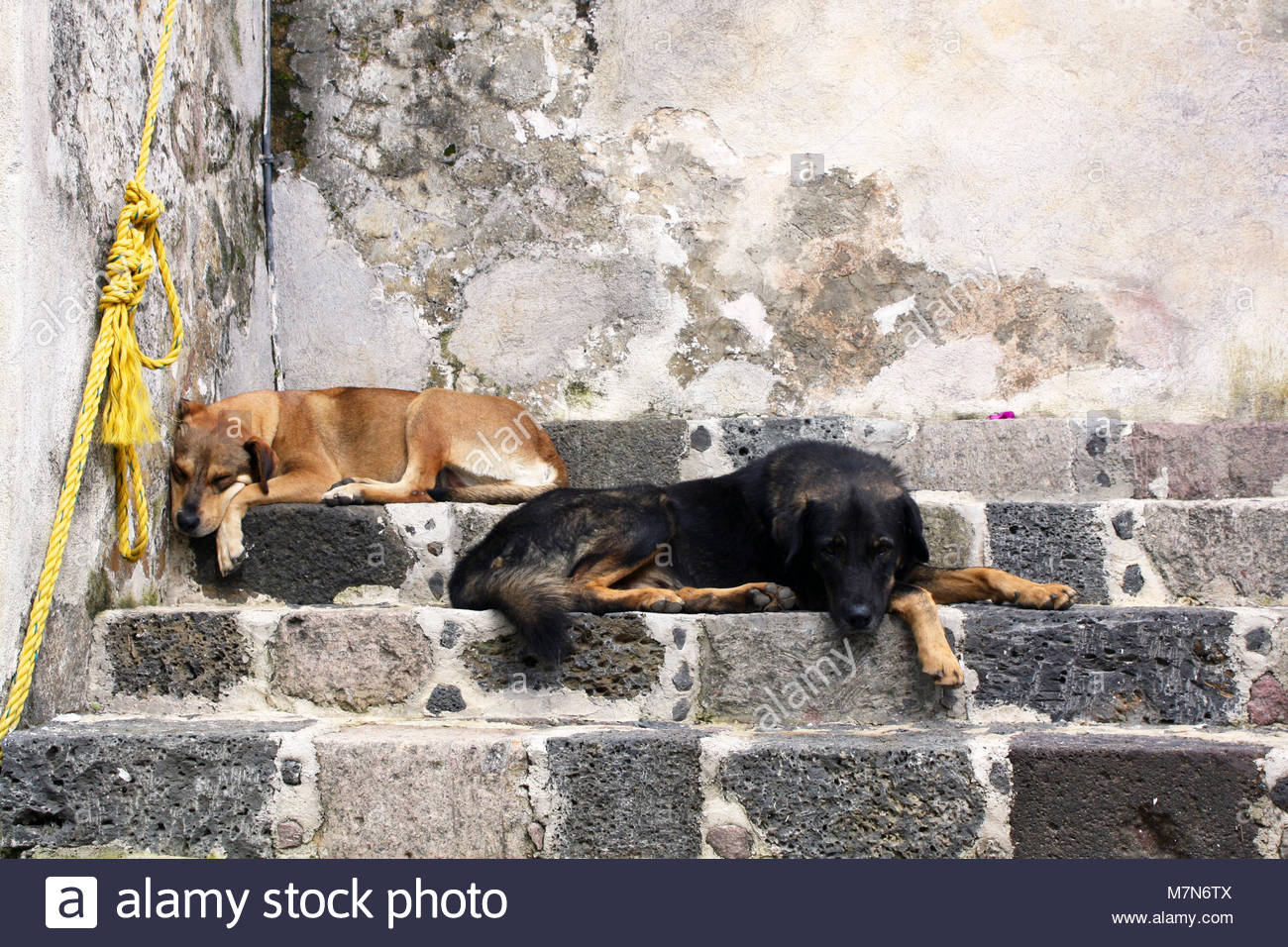 A couple of dogs sleeping peacefully at some stair steps at Tepoztlán's public square. - Stock Image