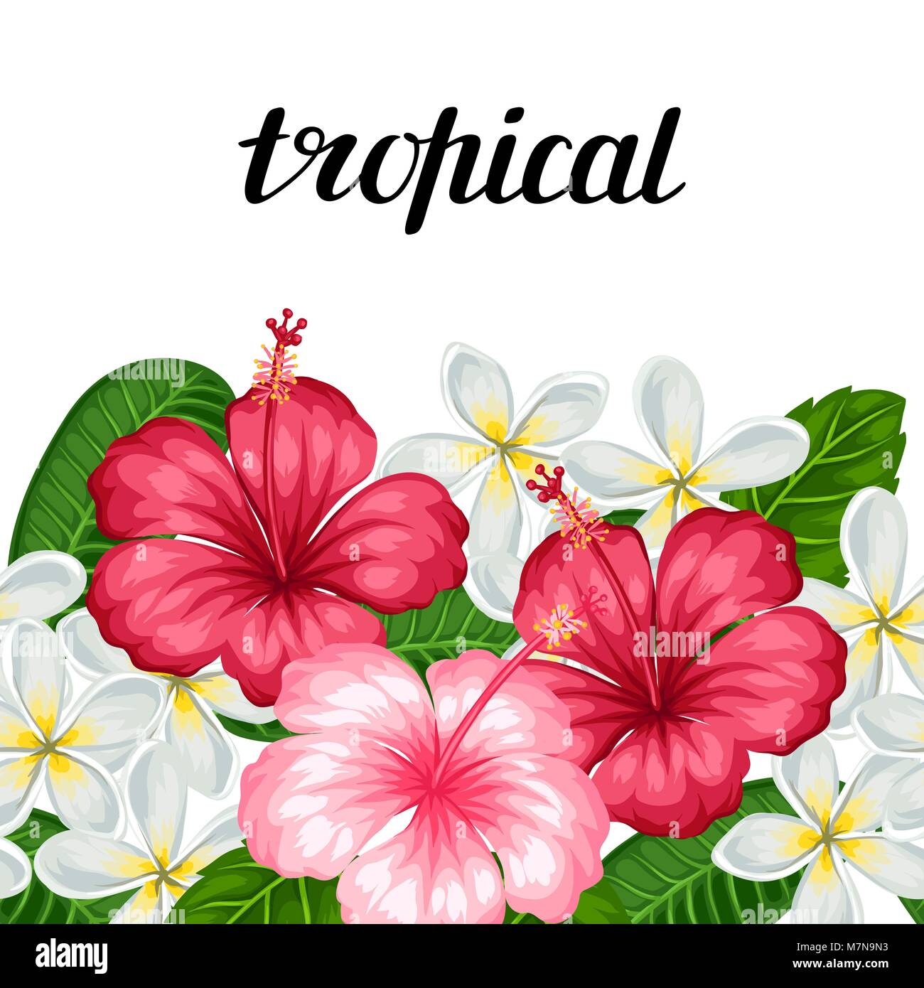 Seamless border with tropical flowers hibiscus and plumeria stock seamless border with tropical flowers hibiscus and plumeria background made without clipping mask easy to use for backdrop textile wrapping paper izmirmasajfo Choice Image