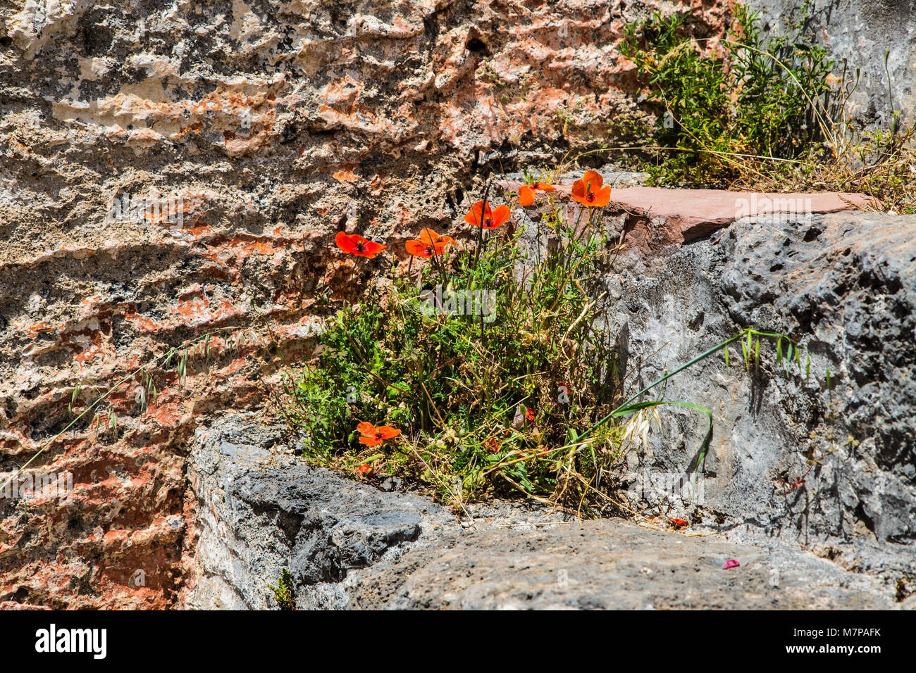 red flowers on a stone step Stock Photo
