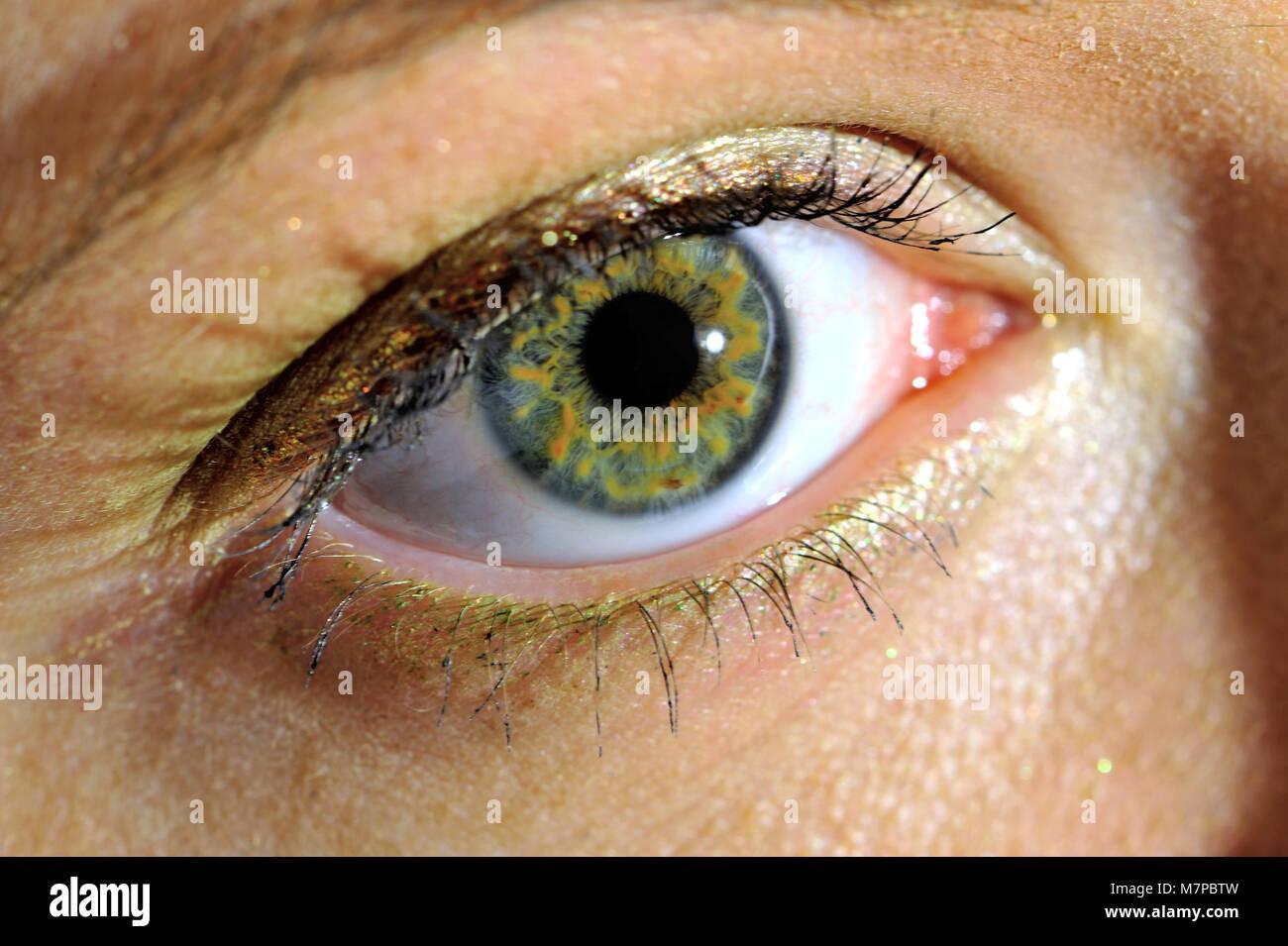 organ, sight, eye, eyes, color, perception, sense, human, person, frame, focus, health, human, people, women, - Stock Image