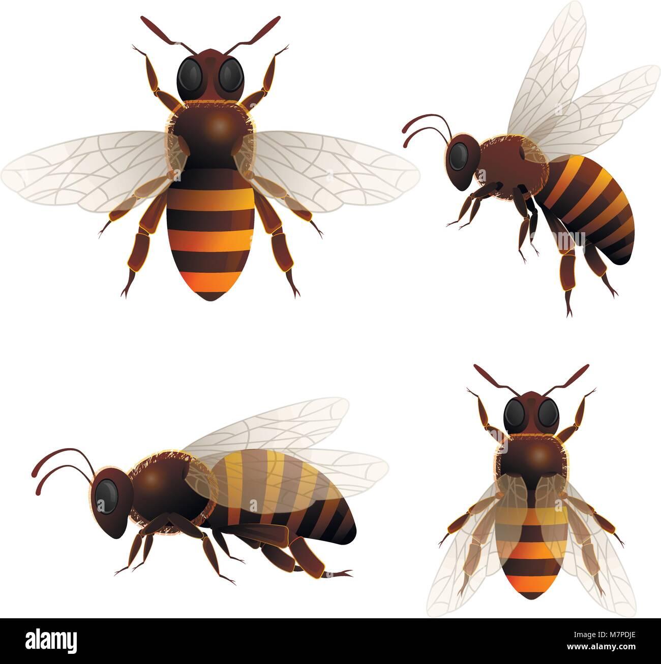 Honey bee isolated icons set - Stock Vector