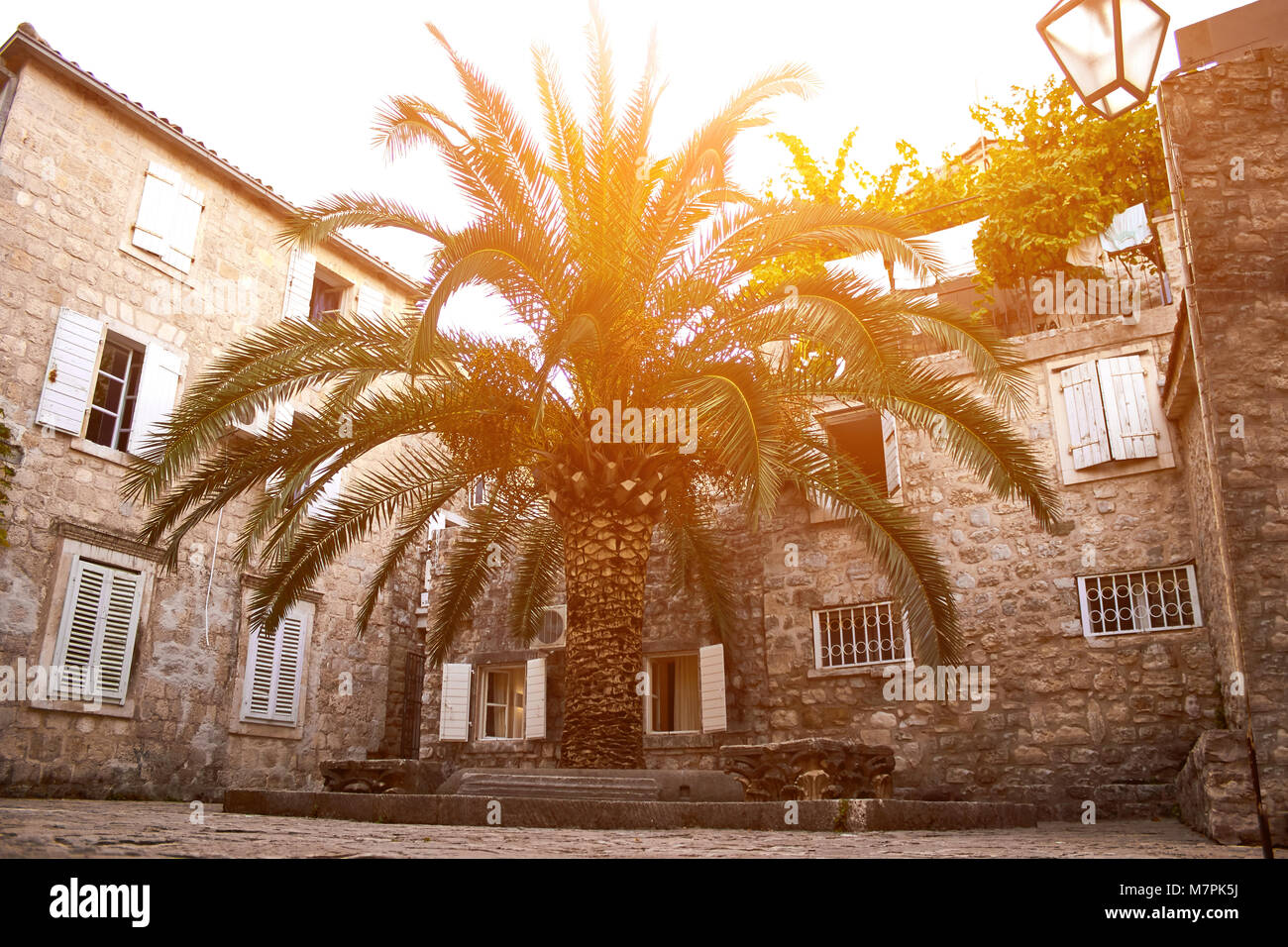 Old Town Budva, Montenegro. We see house and a tall palm. Sun flare - Stock Image
