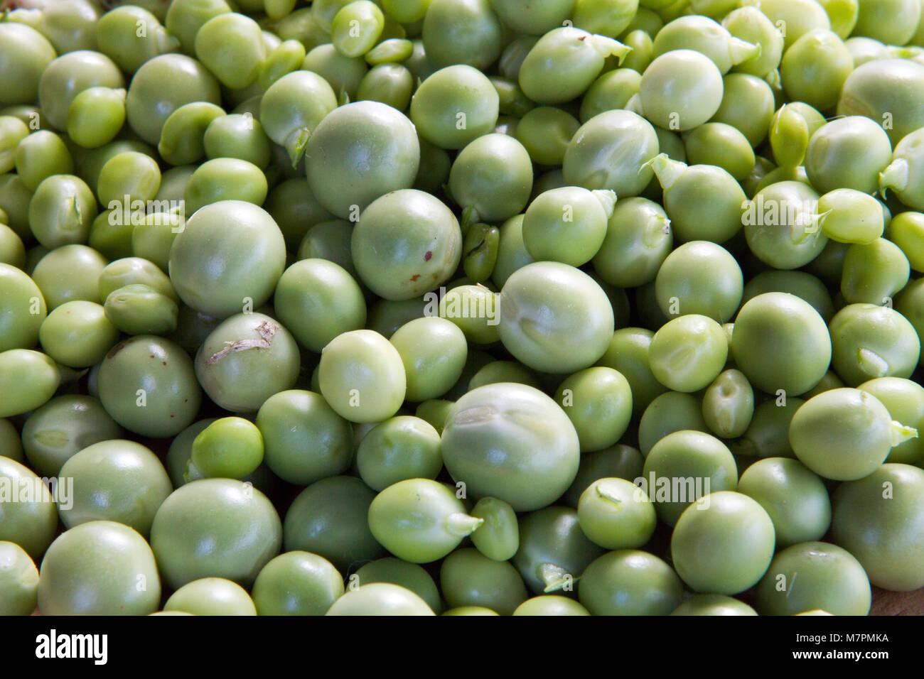 Fresh green peas organic Bio vegetable, raw macro vegetables object.. - Stock Image