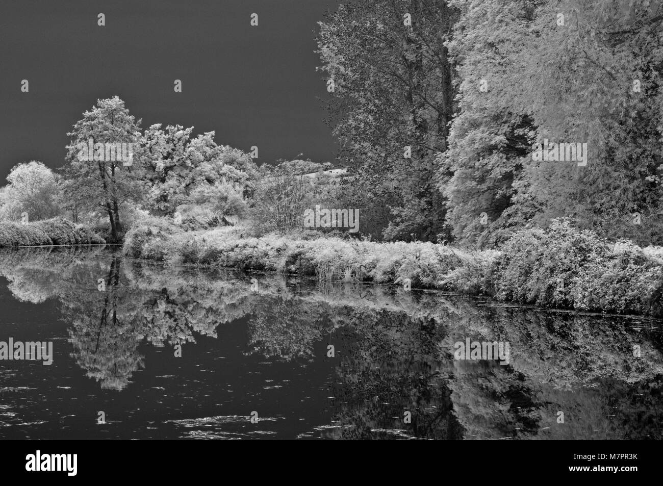 infrared image of reflections of autumanal trees in the still waters of the Exeter Ship Canal in Exeter, Devon, - Stock Image