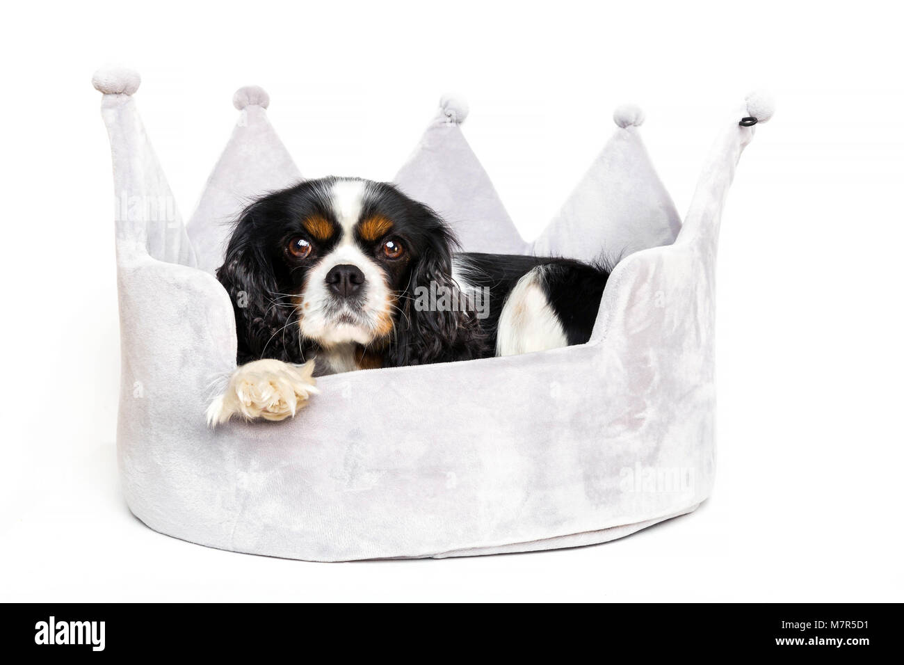 Cute dog resting in comfortable bed - Stock Image
