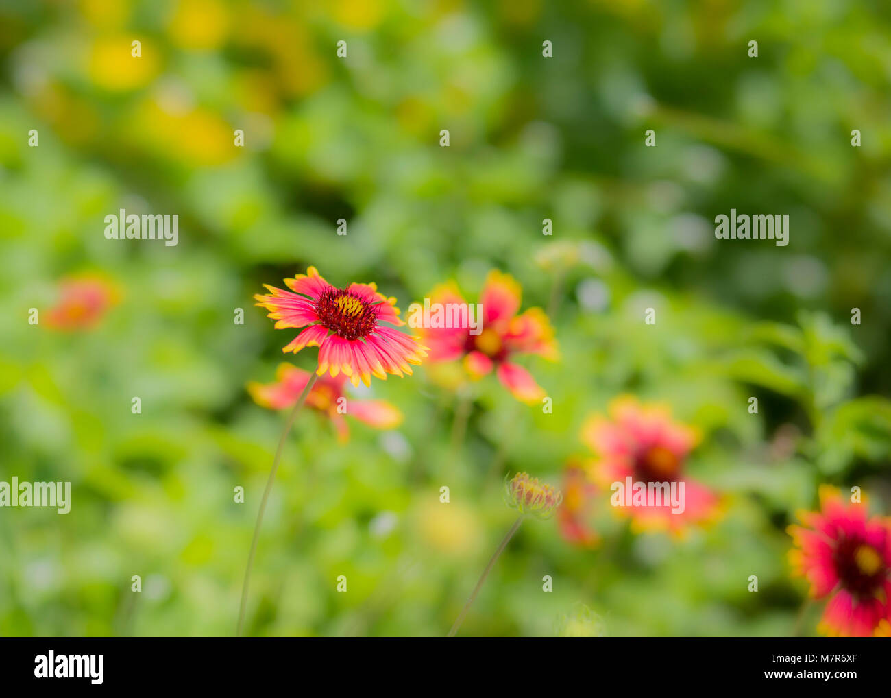 Beautiful Wild Flowers on a Sunny Summer Day - Stock Image