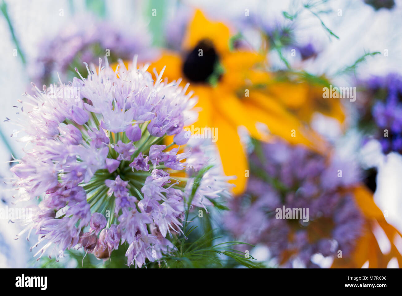 Summer background with soft focus with lilac and yellow garden flowers. Stock Photo