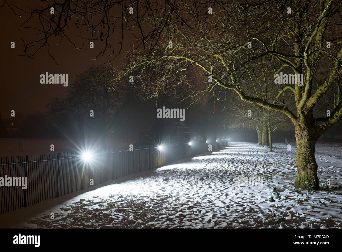 Winter trees along broad walk in the snow early morning before dawn. Merton college, Oxford, Oxfordshire, England - Stock Image