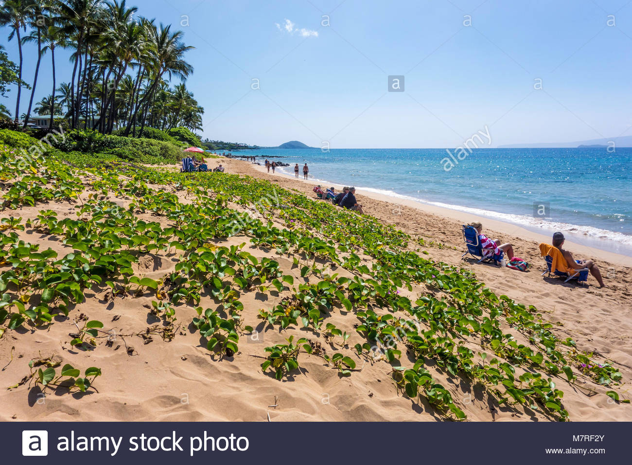 Keawakapu Beach a palm lined sandy Polynesian beach with gentle surf on the Pacific island of Maui in the state - Stock Image