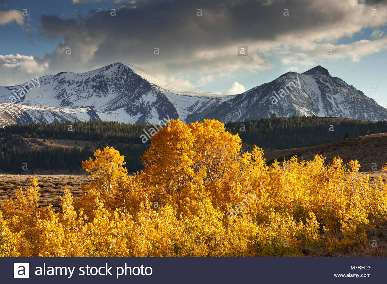 Mount Warren and Gilcrest Peak with Aspens and Clouds, Inyo National Forest, California - Stock Image