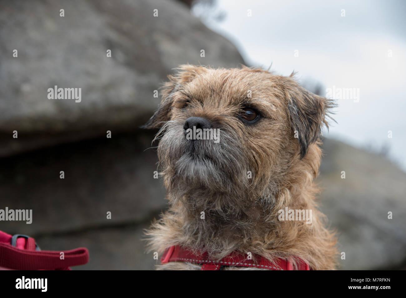 Franky - Stock Image