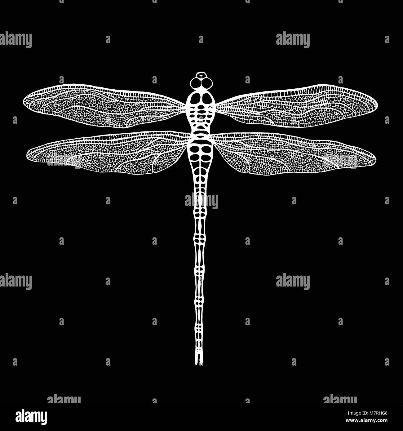 Dragonfly. White dragonfly on black background. Hand drawn vector damselfly. - Stock Vector