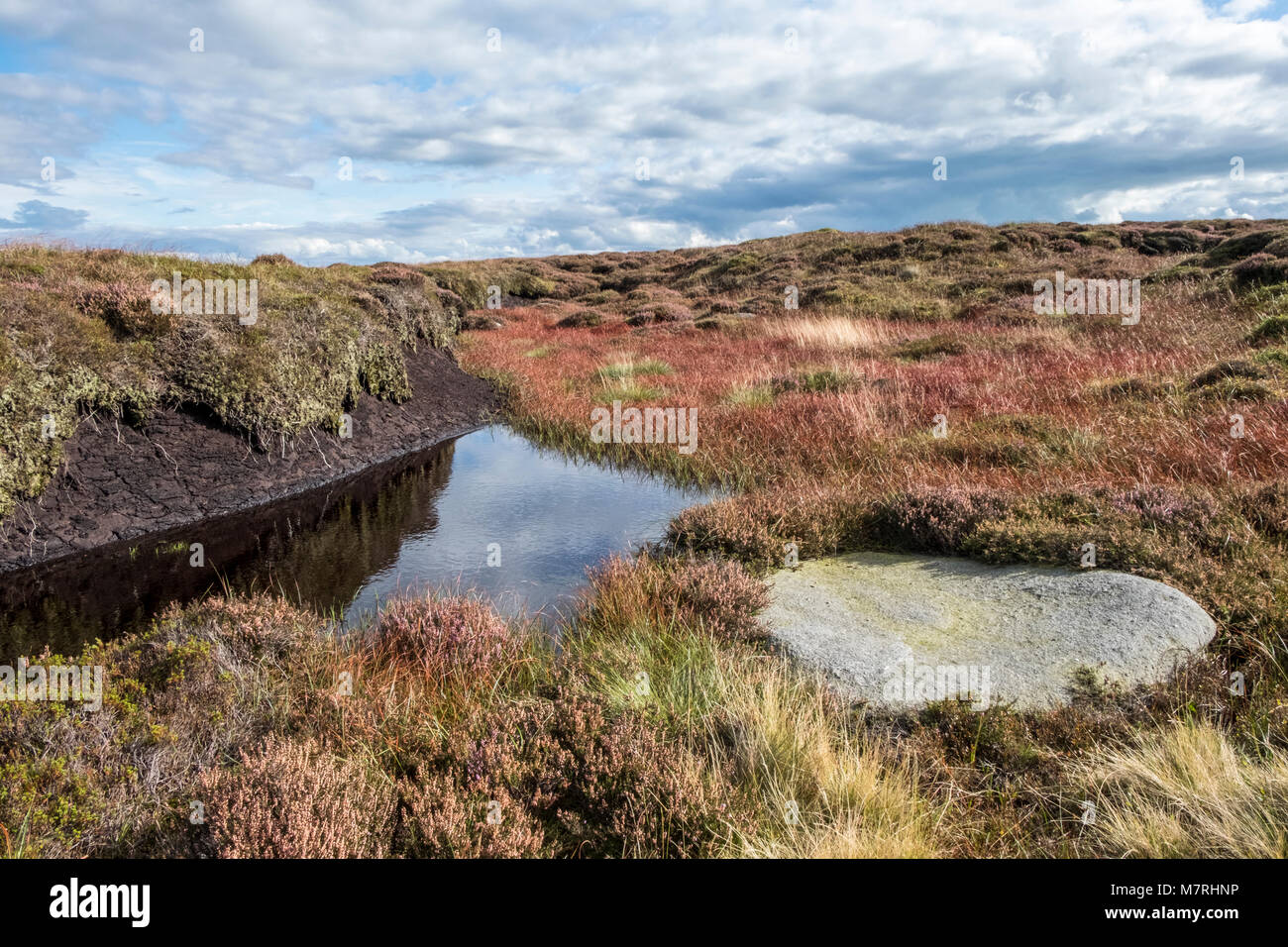 Water and grasses on peat bog moorland, Kinder Scout, Derbyshire, England, UK - Stock Image