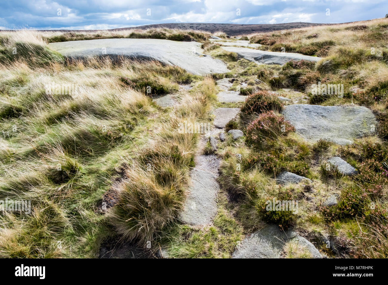 Gritstone, grass and heather on moorland on Kinder Scout, Derbyshire, England, UK - Stock Image