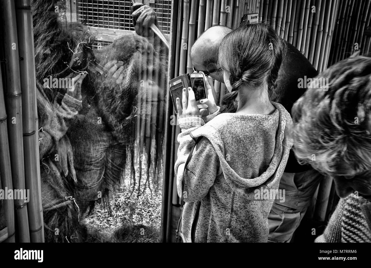 Blackpool Zoo - Stock Image
