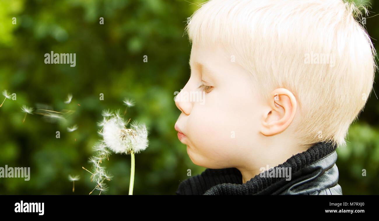 My son aged 5 blowing a dandelion - Stock Image