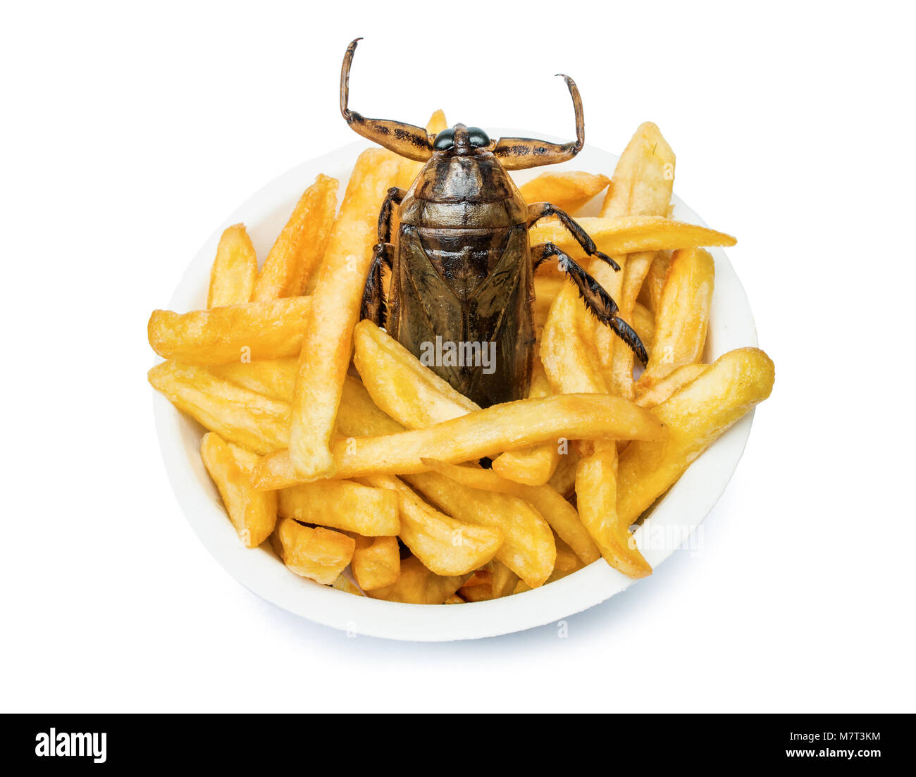 Cockroach Food Truck Pictures