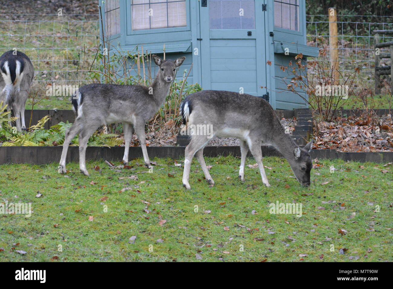 Wiring up a summer house wiring center close up of young sika deer cervus nippon close to painted stock rh alamy com house wiring for dummies house wiring diagrams asfbconference2016 Images