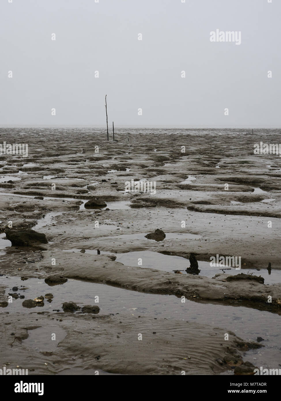 Salt marshes at Bradwell on Sea, Essex. This conservation area is a site of special scientific interest on the UK - Stock Image