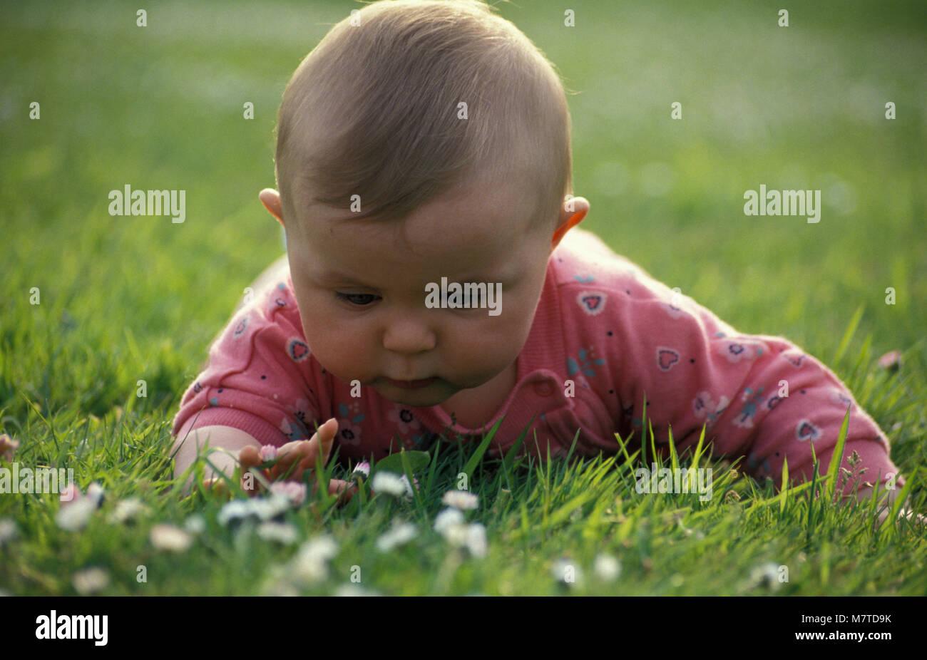 baby girl lying on tummy in garden exploring daisies - Stock Image