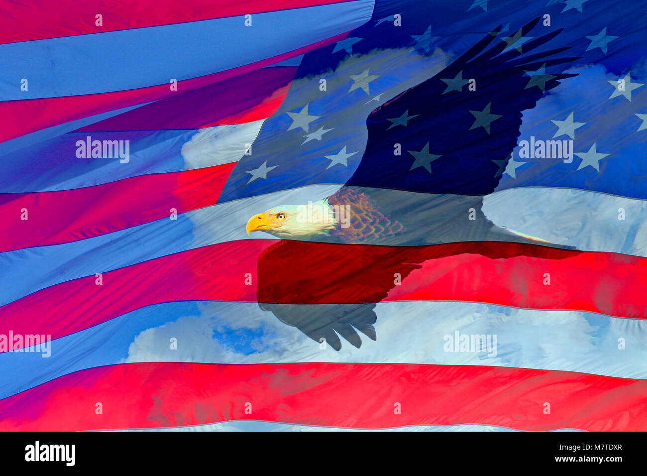Bald eagle in flight and US Flag composite - Stock Image
