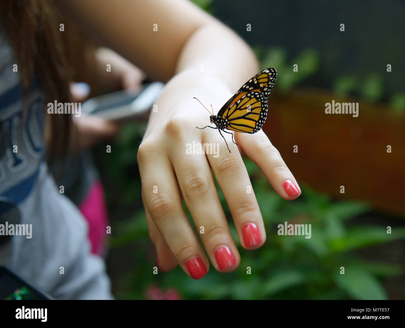 Girl with monarch butterfly on her hand, La Paz Waterfall Gardens, Costa Rica - Stock Image