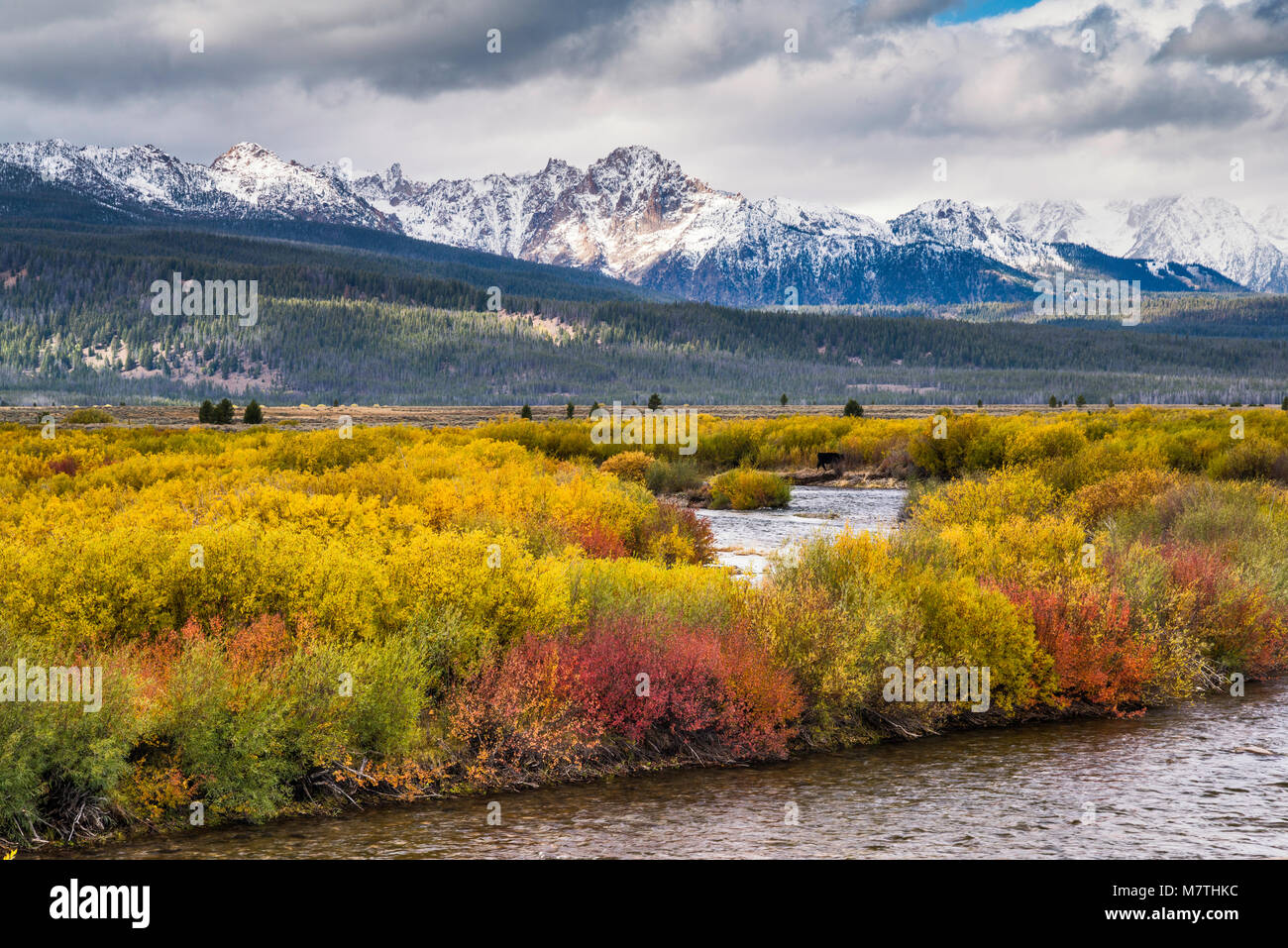 Sawtooth Mountains under snow over Salmon River, Sawtooth Valley in fall foliage, from Sawtooth Scenic Byway, Sawtooth - Stock Image