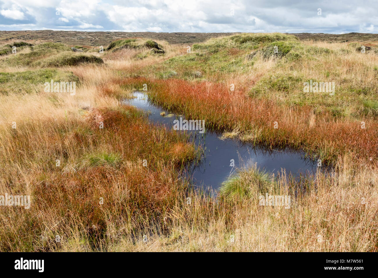 Moorland with Autumn colours. Peat bog moor in September on Kinder Scout, Derbyshire, Peak District National Park, - Stock Image