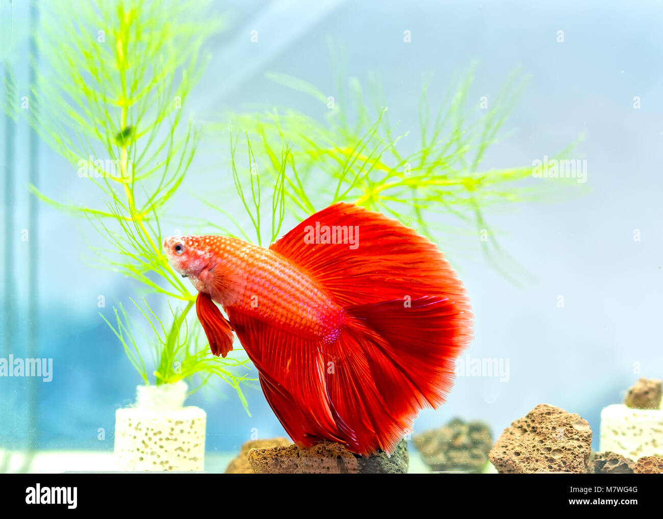 Fish Tank Cut Out Stock Photos & Fish Tank Cut Out Stock Images - Alamy