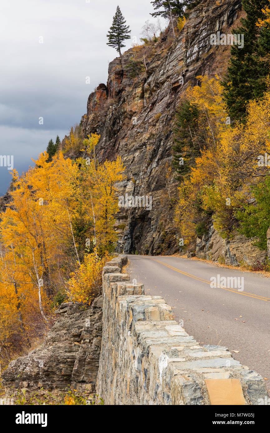Golden aspen along Going to the Sun Road, autumn, Glacier National Park, Montana - Stock Image