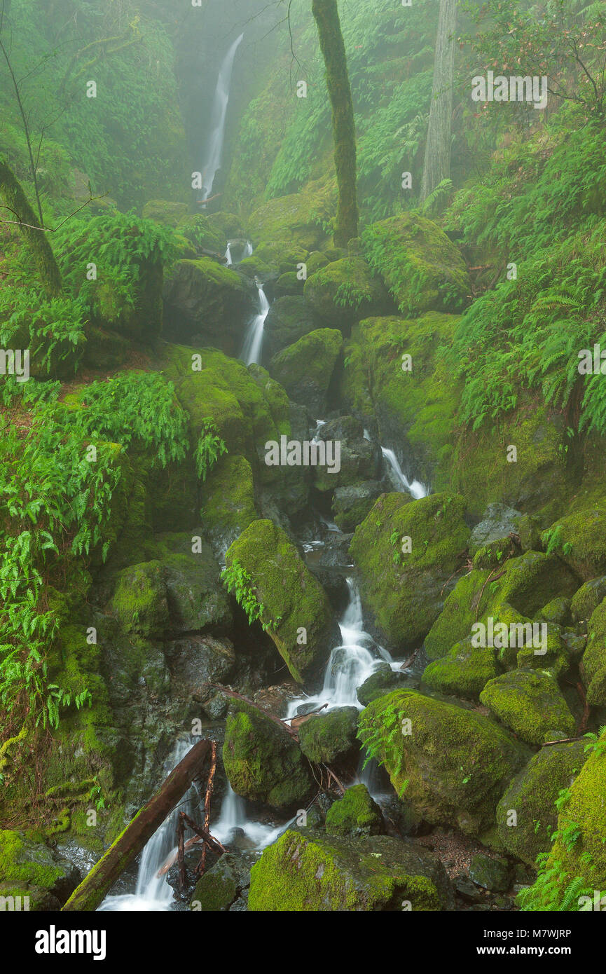 Falls, Cataract Canyon, Mount Tamalpais, Marin County, California - Stock Image