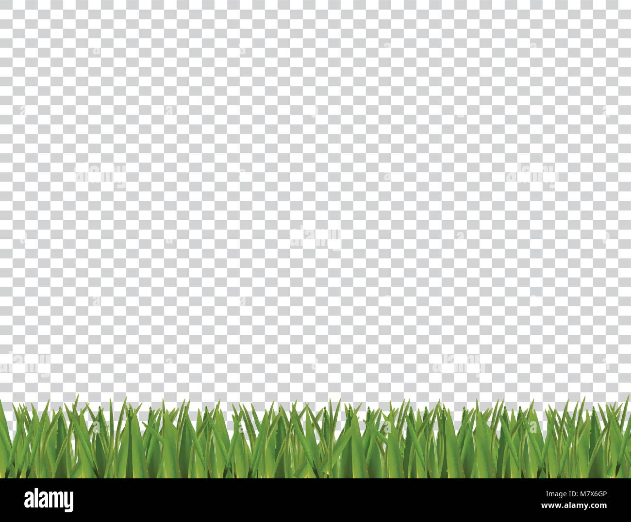 Green realistic grass horizontal border isolated on transparent ...