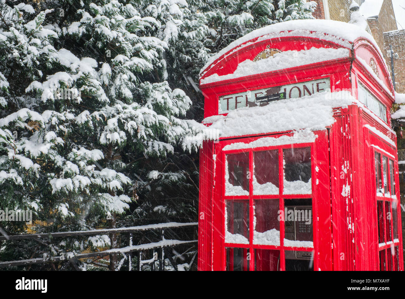 Old fashioned traditional British red public telephone box covered in snow beside snow covered branches of hedge - Stock Image