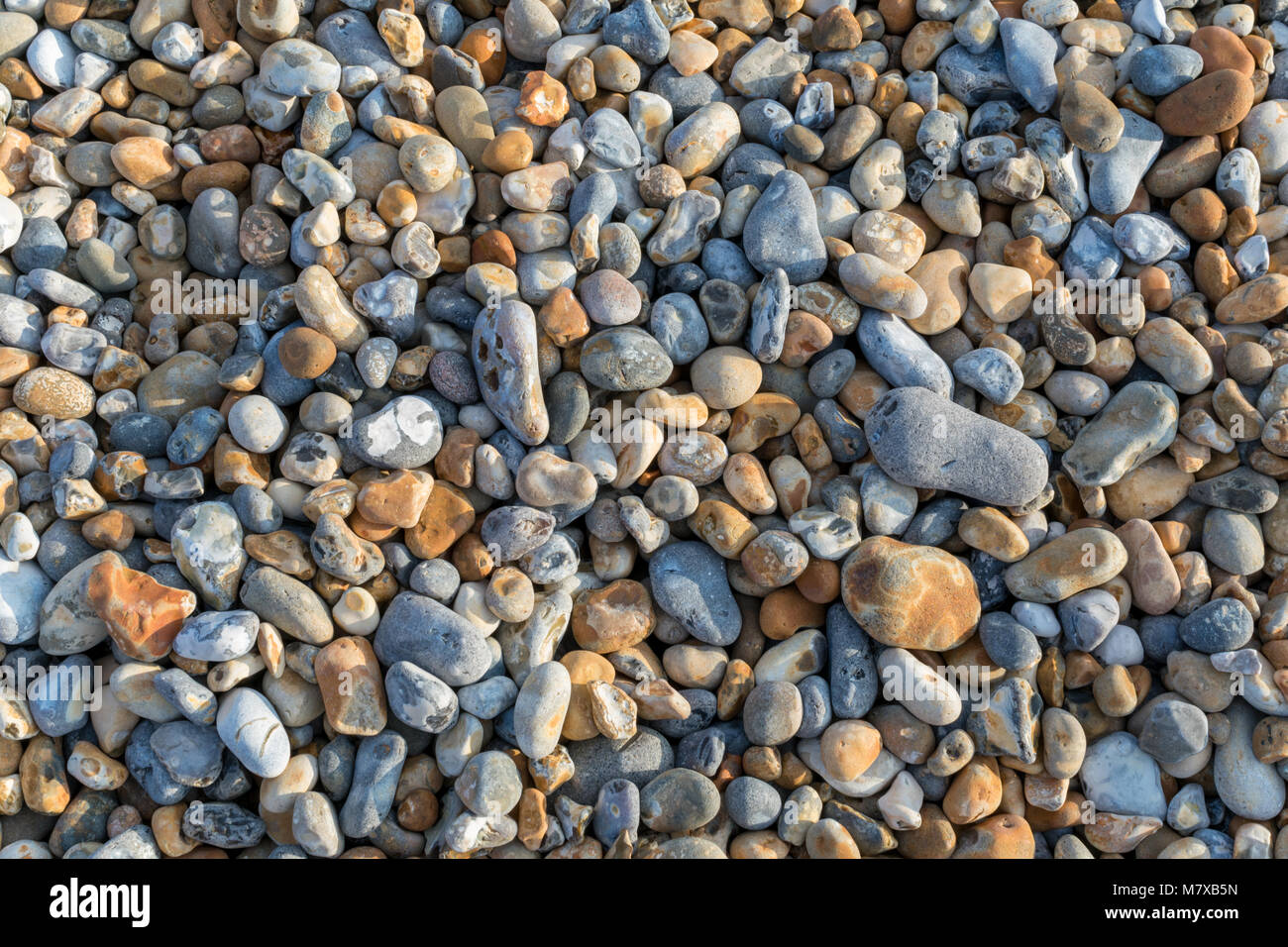 Close-up of shingle on the beach at Bexhill-on-Sea with a mix of grey, ochre and bluey-white pebbles of different - Stock Image