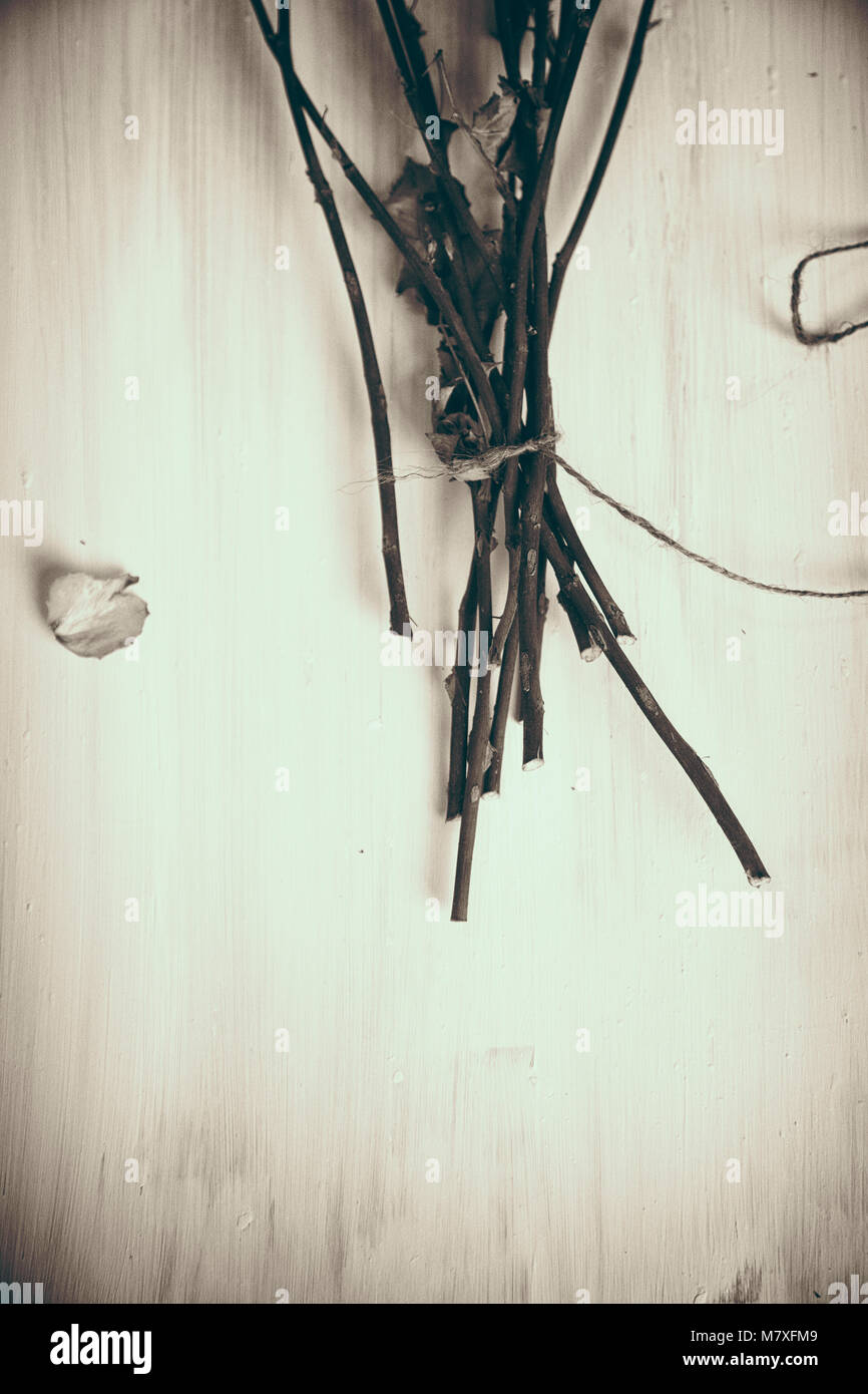 Bunch of Dried Roses Stems - Stock Image