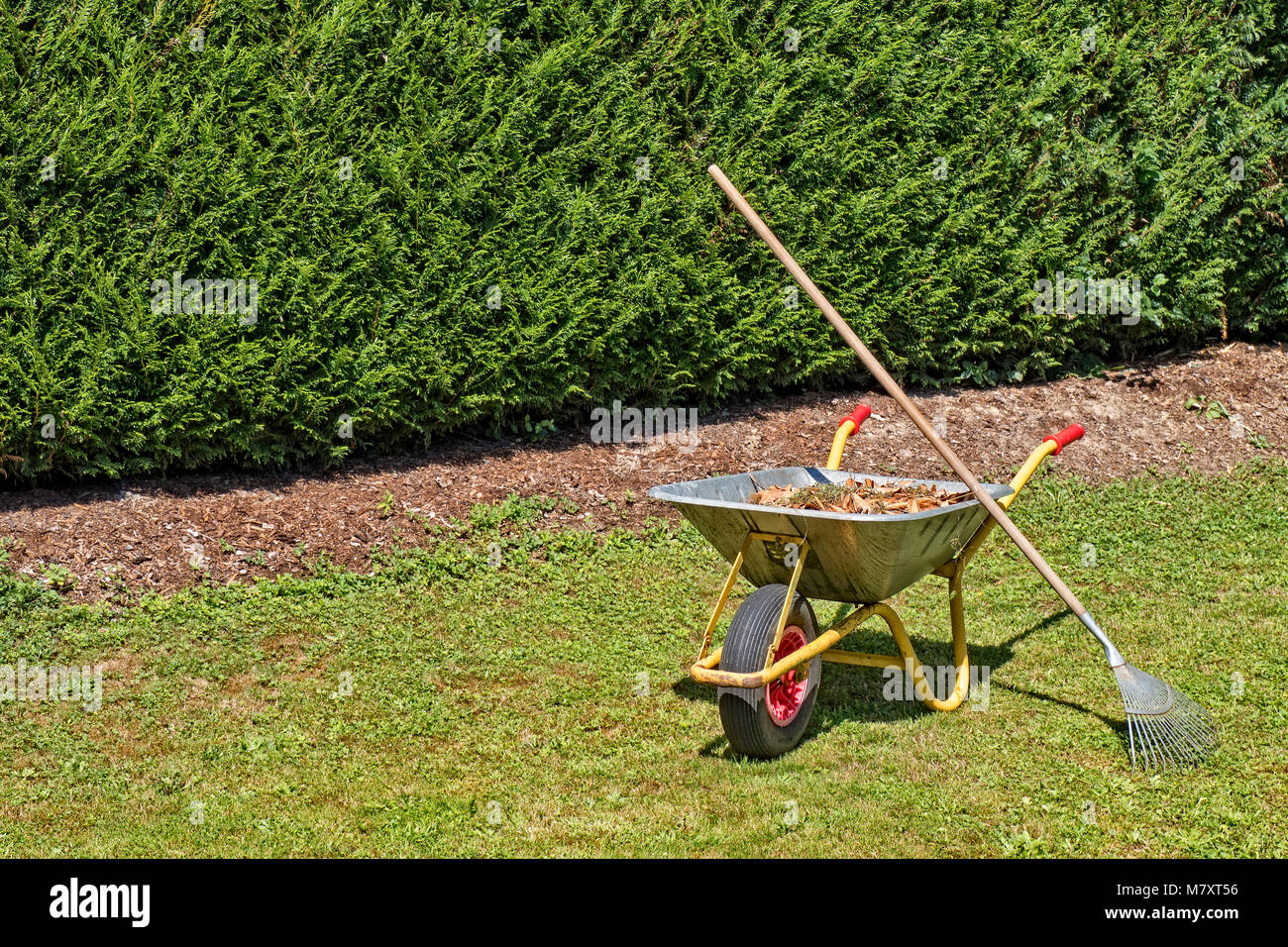 Wheelbarrow filled with plant waste standing on grass in private garden Stock Photo