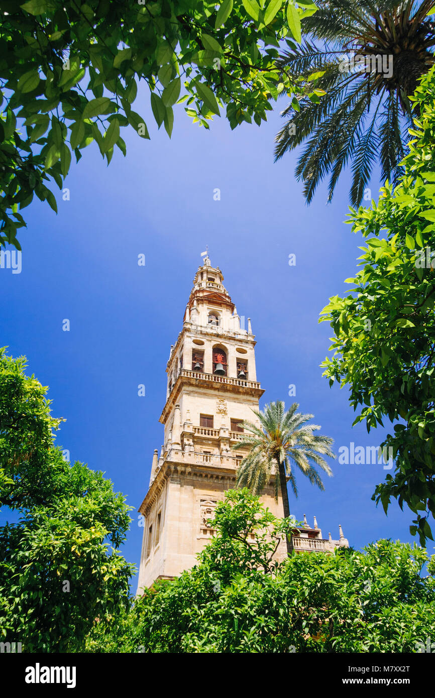 Cordoba, Andalusia, Spain : Mosque–Cathedral of Cordoba, Bell tower from Court of Oranges framed by vegetation. - Stock Image