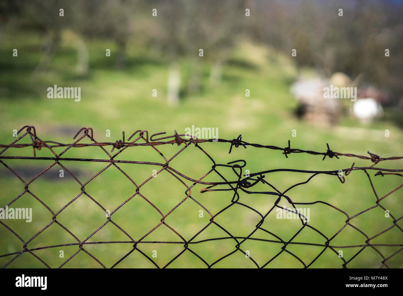Field through the barbed wire fence, natural light - Stock Image