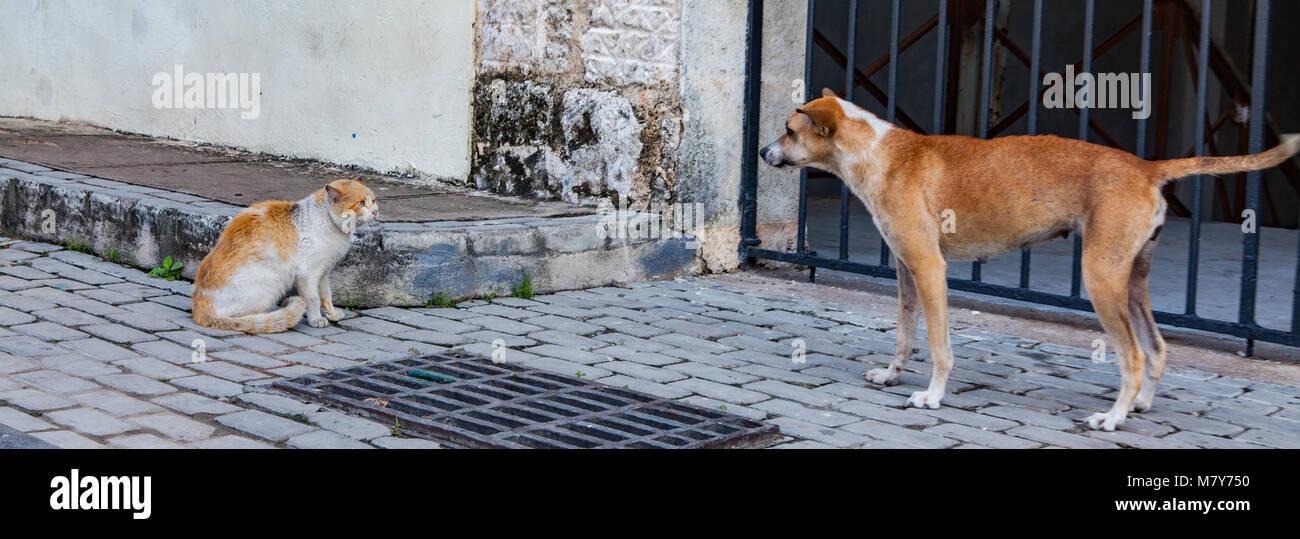 Cat vs dog - Stock Image