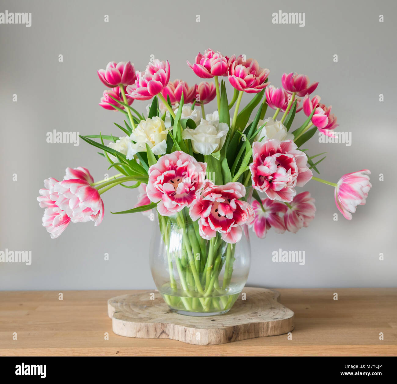 Pink double tulips stock photos pink double tulips stock images vase with double dutch tulips stock image reviewsmspy