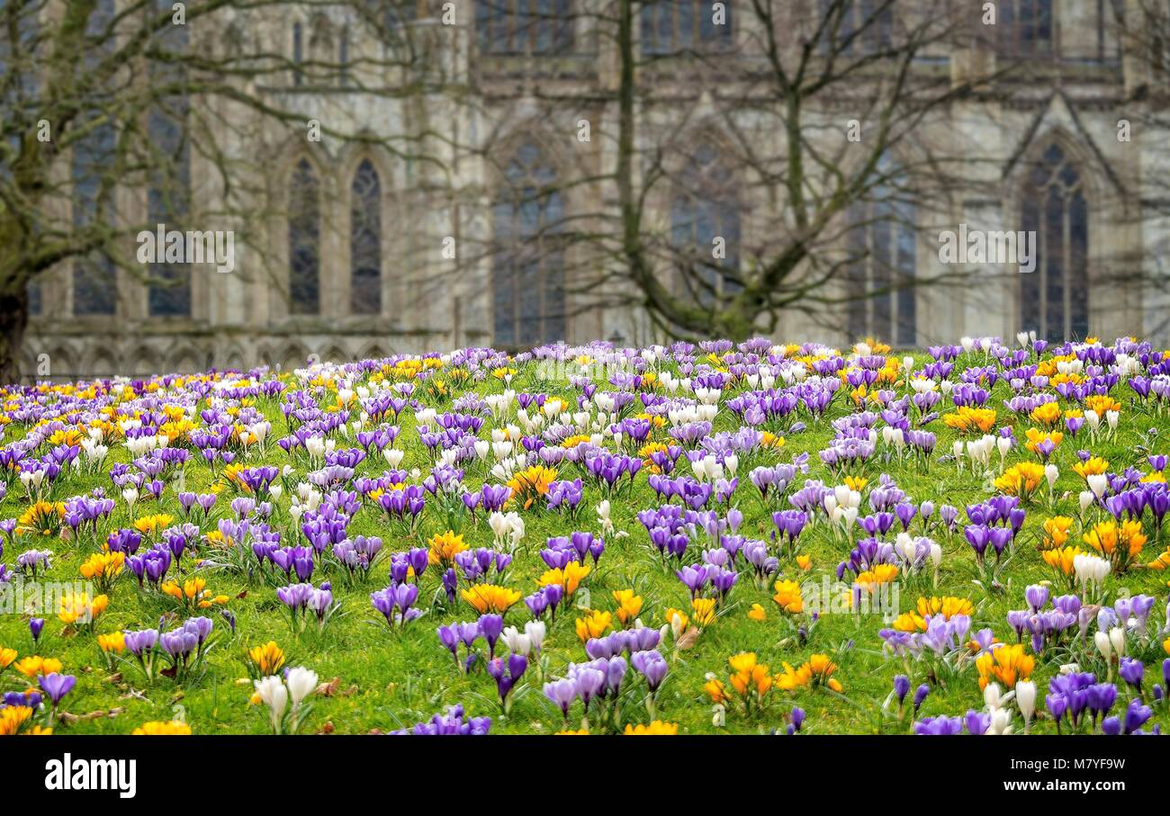 Colourful crocus flowers on a mound of grass with gothic windows of