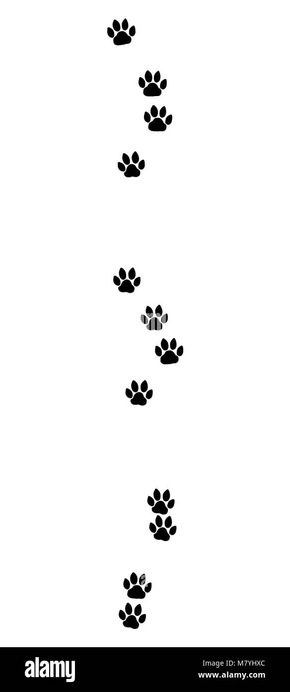 Cat tracks. Typical footprints of a domestic cat - black icon illustration on white background. - Stock Image