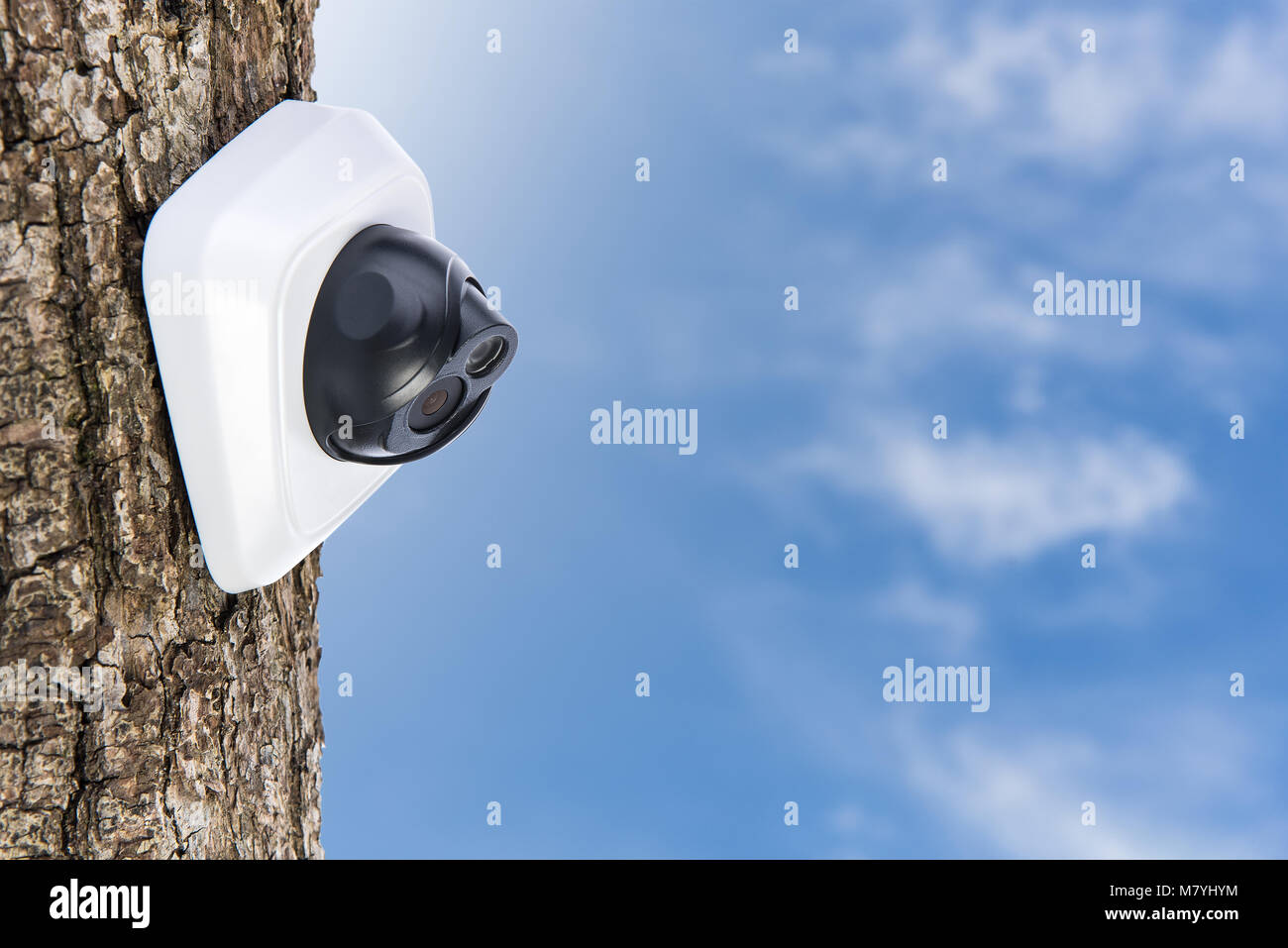 IP Camera on the oak tree trunk, beautiful sky background with copyspace. Concept - technology and security - Stock Image