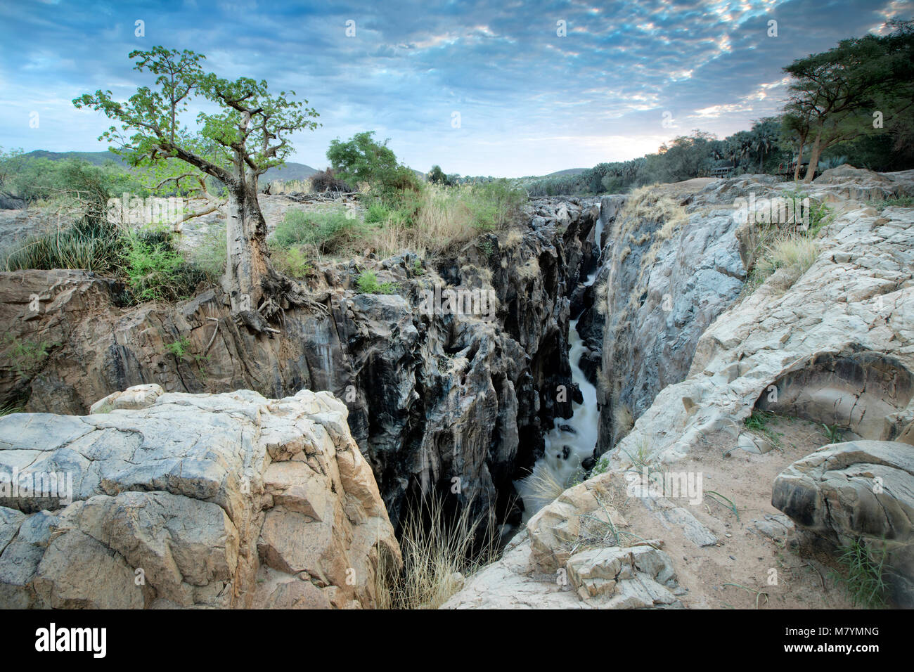 Baobab tree on edge of Epupa Falls - Stock Image